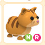 Ginger Cat NR pet adopt me