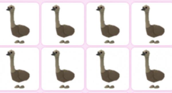 Emu (murah) - Adopt me