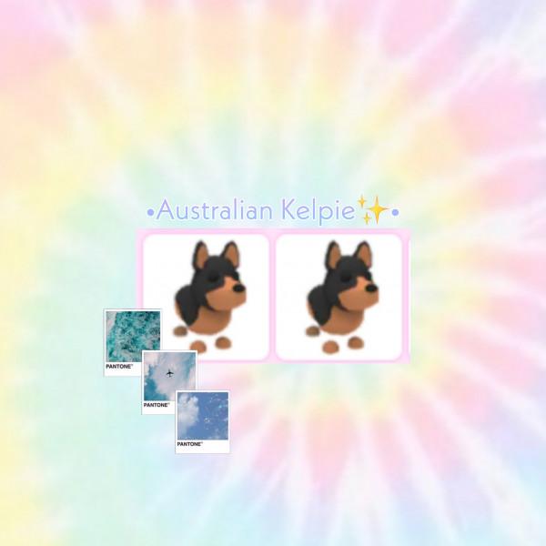 Australian Kepie (rare) -Pets Adopt me