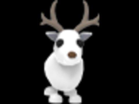 Arctic Reindeer R/F   Adopt Me
