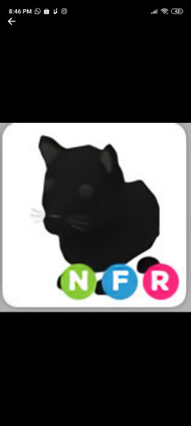 NFR Panther Neon Fly Ride Limited