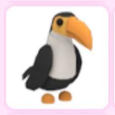Toucan - Adopt Me