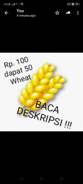 Wheat x50