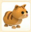 Ginger cat (ADOPTME)