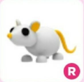 R GOLDEN RAT