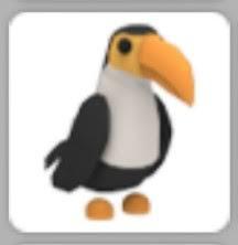 Normal toucan|Adoptme