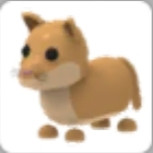 Puma pet Adopt me