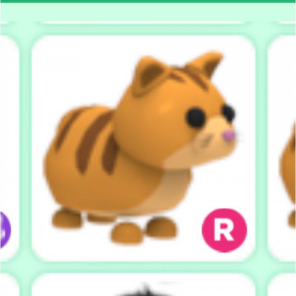 Ginger cat R