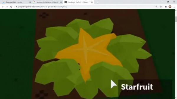 Starfruit seed