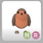 Nr robin