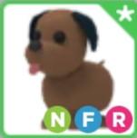 Chocolate Labrador NFR adopt me